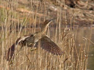 bird and pastures