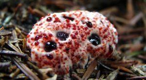 bizarre mushroom