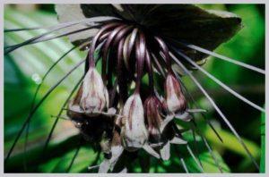 bizarre flower
