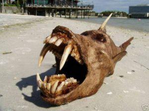 monster creature fish